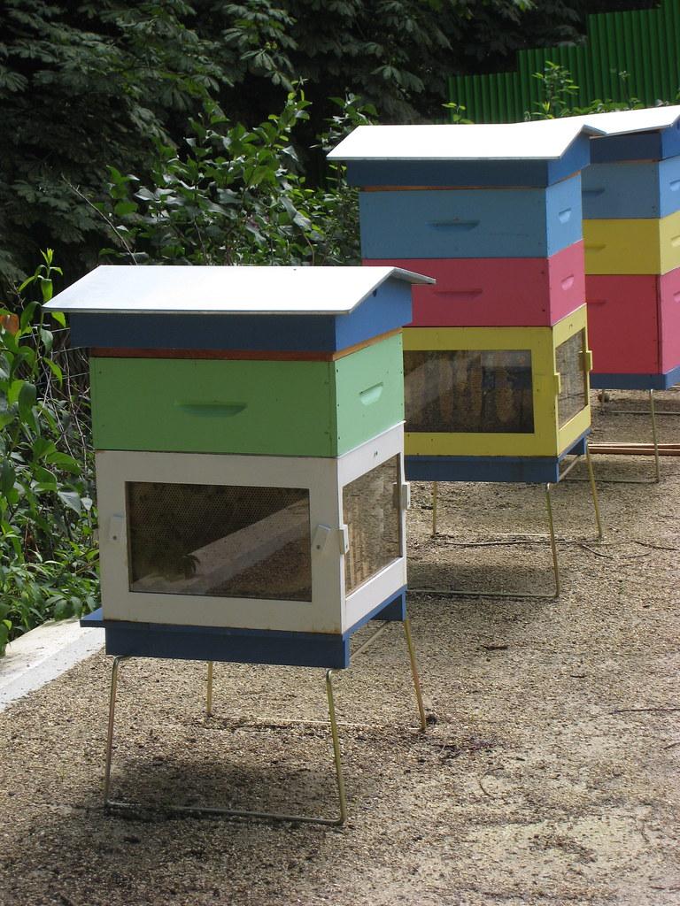 Ile de puteaux les ruches du parc lebaudy christophe for Piscine ile de puteaux