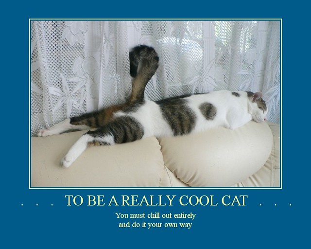 Really cool cat kitas wisdom for summer hes been sleepi flickr really cool cat by room with a view voltagebd Choice Image