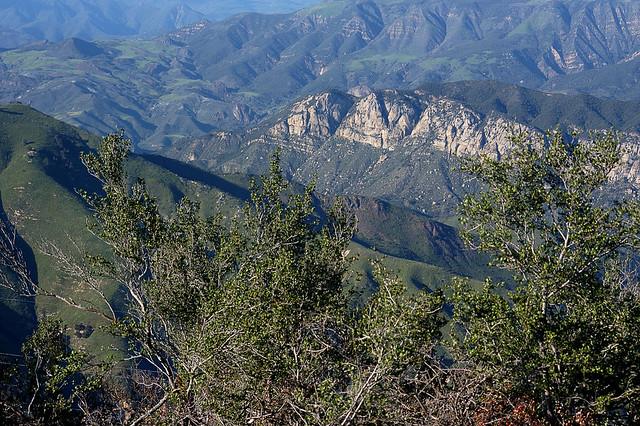 Image result for los padres national forest