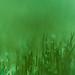 Green blanket (macro)