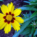 Flower in Cambridge