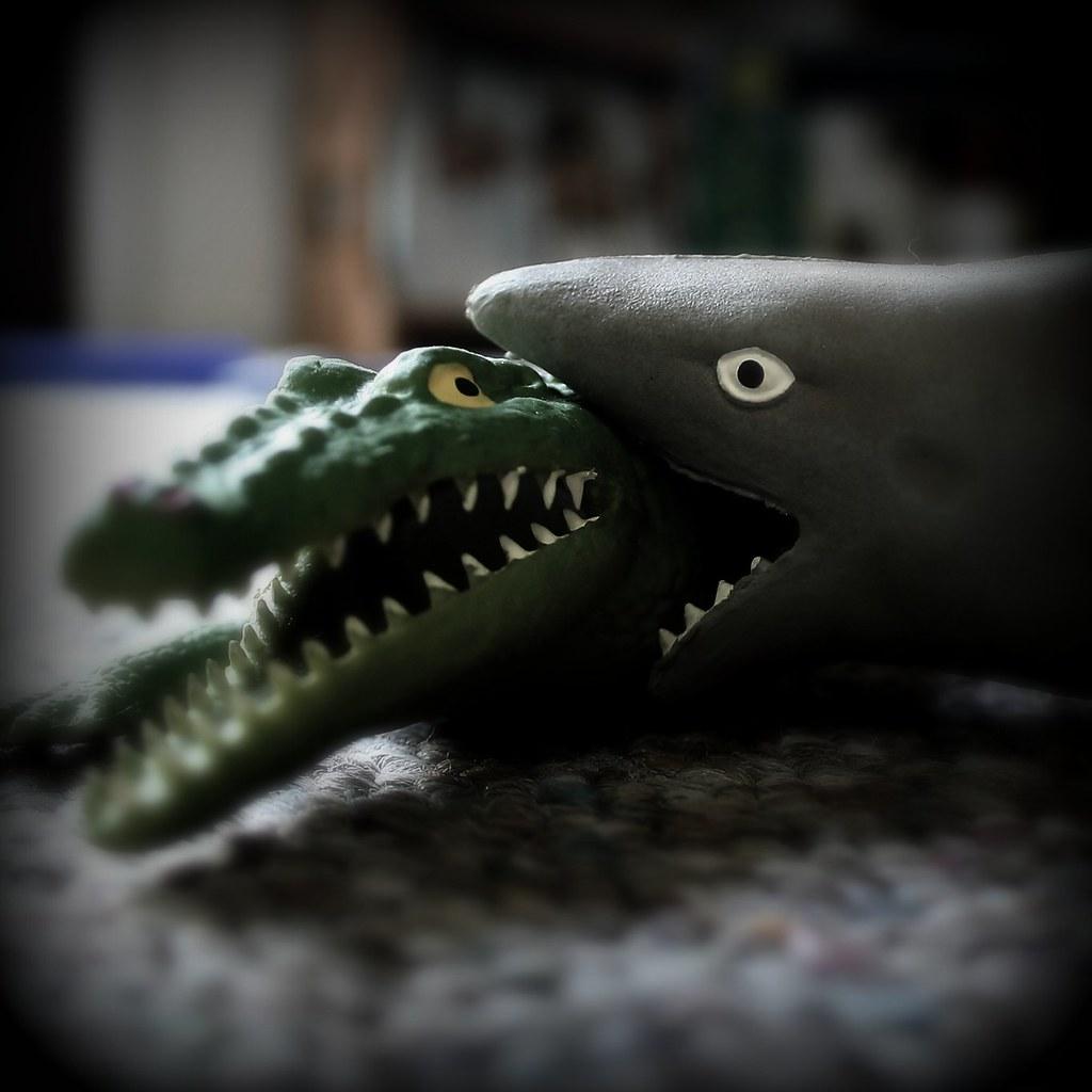 Crocodile shark