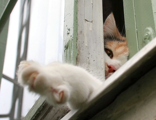 Curious Window Cat | by Tomi Tapio