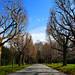 Longwood Walk