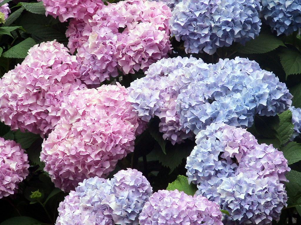 Light Purple Flowers Tumblr