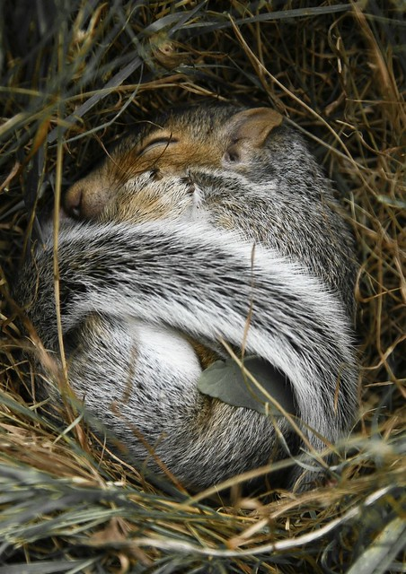 Squirrel baby lost - photo#23