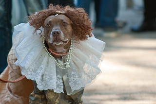 Halloween Dogs Parade 2010 | by avianto