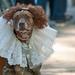Halloween Dogs Parade 2010
