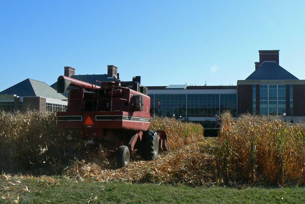 Morrow Plot 3 Uiuc Morrow Plot Corn Harvest America 39 S