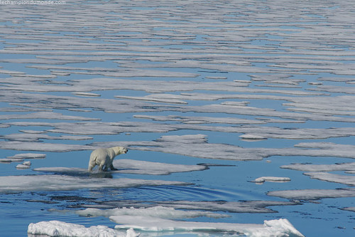 Polar bear sighting in the Baffin Sea. No land in sight. | by paulgalipeau.com