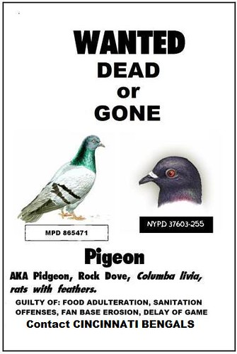 bengals pigeon poop poster mike licht notionscapital   flickr