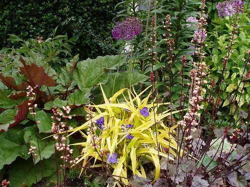 May Perennial Combo 1 | by RHR Horticulture