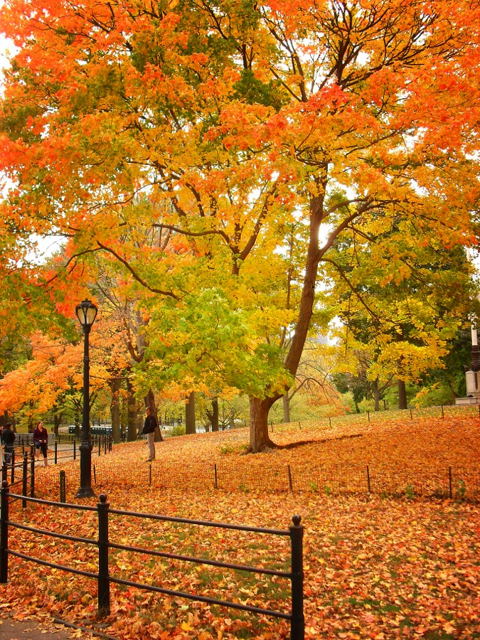 Central Park, New York City 435