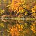 Silver Mine Lake Foliage