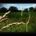 *Allegro* Wind in the field