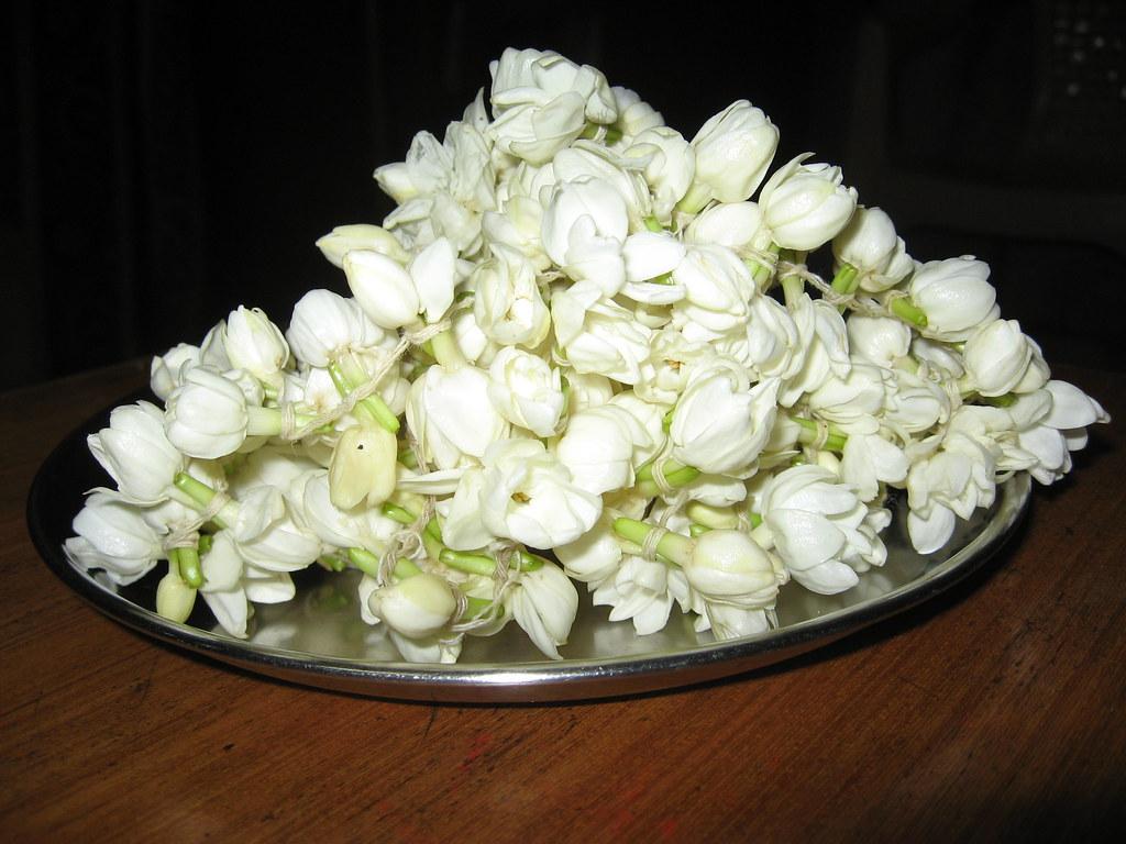 Mogara Garlant | Common name: Arabian Jasmine 'Belle of