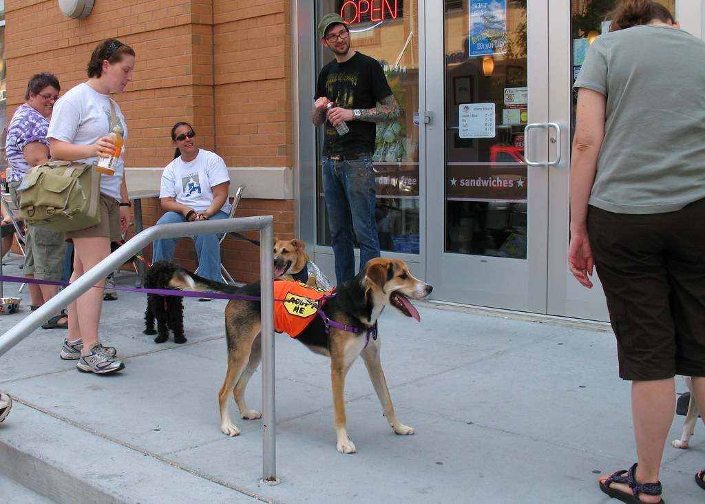 Dog Adoption Events In Nyc