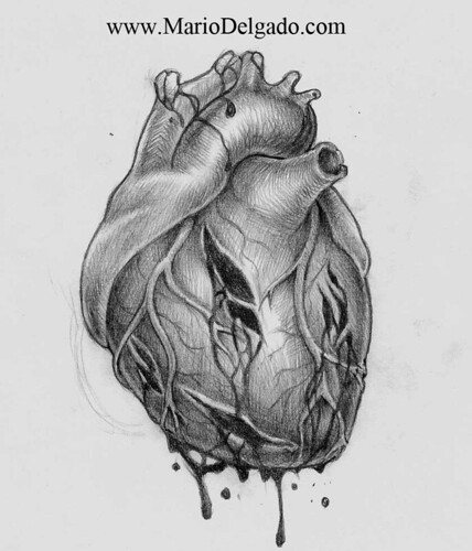 Gallery For gt Human Heart Drawings In Pencil