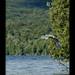 Great Blue Heron entering Meacham Lake
