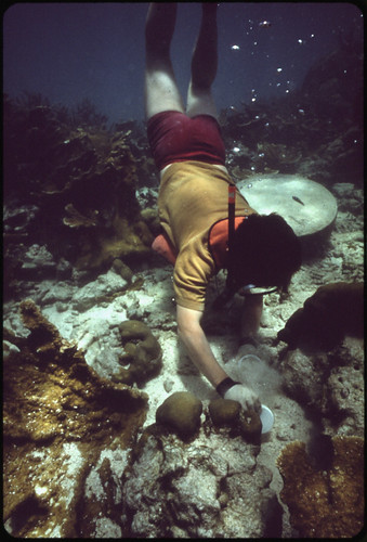 Snorkeler at John Pennekamp Coral Reef State Park near Key Largo. At the Time of This Picture, Water Clarity Was Good, But Experienced Divers Say Clarity Is Far Less Than It Was 20 Years Ago Because of Dredging and Filling Operations by Land Developers. | by The U.S. National Archives