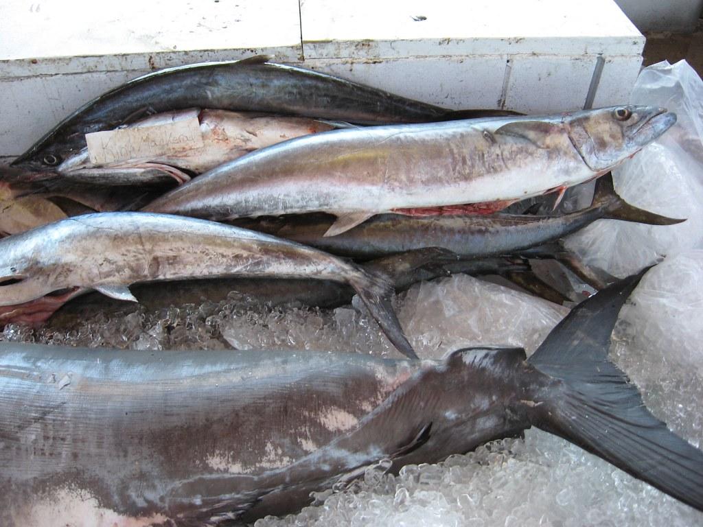 Alabama deep sea fishing rodeo dauphin island al ryan for Deep sea fishing mobile al