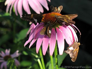 Pollinator Party 1 | by Farmgirl Susan