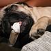 Dyna Sleeps with a Bone