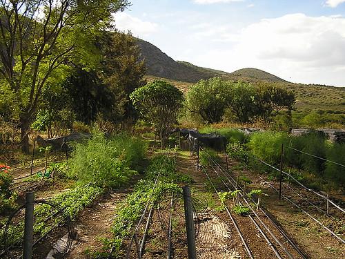 Sistema de riego por goteo drip irrigation todo el - Sistemas de goteo ...