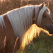 A beautiful horse in the sunset