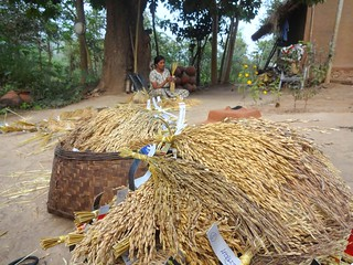 A seed farm run by scientist Dr Debal Deb has more than 920 traditional rice varieties