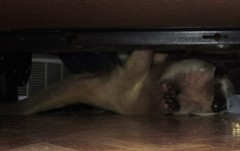 Aurora playing under the bed