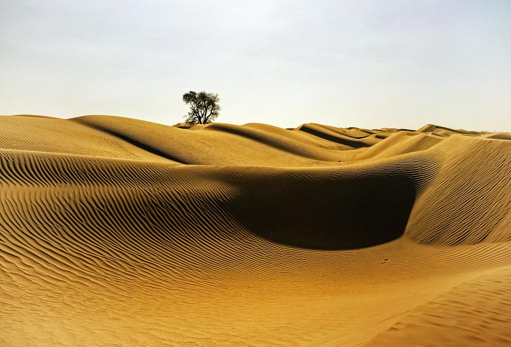 Desert Afternoon | Near Al Qudra desert oasis, United Arab E ...