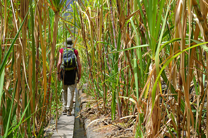 Walking on a levada through cane, Ribeira do Paul Valley, Santo Antao, Cape Verde