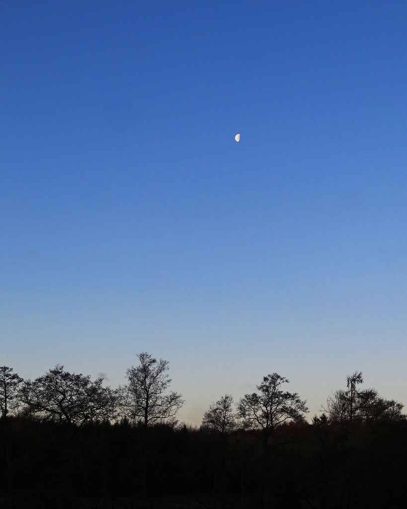 Moon over the meadow