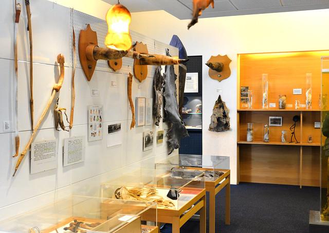 Penes de cachalotes y demás réplicas del museo