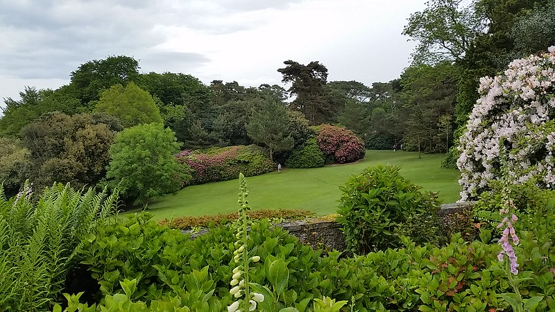 lawn and rhododendrons