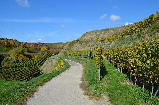 Path through vineyards, Ihringen, Kaiserstuhl, Germany