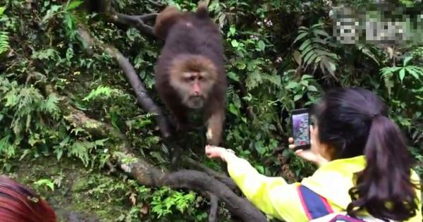 Woman exposes in the Emei mountain by a monkey who robbed the cell phone, the staff said it posed