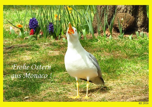 Frohe Ostern aus Monaco März 2016 Foto mit Möwe im Jardin Saint-Martin Brigitte Stolle