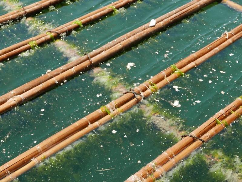 保麗龍在使用及抽拉之間,就會產生很多的小削屑,造成水域汙染。圖片來源:晁瑞光