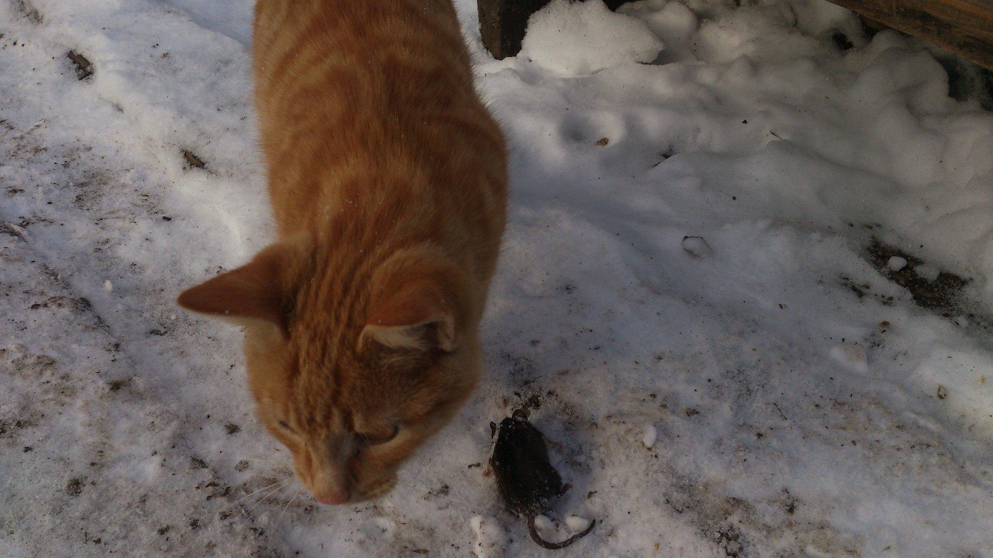 Кот и мышь.
