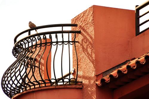 Cannes / Côte d'Azur, März 2016. Die Symbolblume von Cannes ist die Mimose. Zur Blütezeit, im Februar, gibt es hier ein nach ihr benanntes Fest. Berühmter ist Cannes jedoch für seine Festivals: das Musikfestival im Januar und das Filmfestival im Mai. Während unseres Aufenthalts war die Stadt ruhig und beschaulich bei angenehmen 20 °C - Fotos Brigitte Stolle 2016