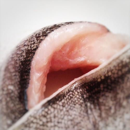 Antarctic Queen, chile, Chilean southern hake, deep sea, fish, merluccius australis, Merluza Austral, Southern Hake, 澳洲無須鱈, 魚