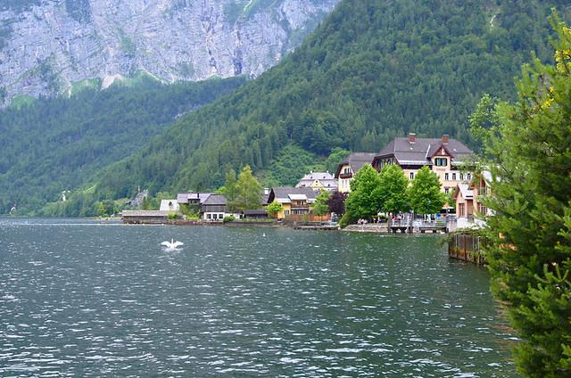 Swan lake, Hallstatt, Austria
