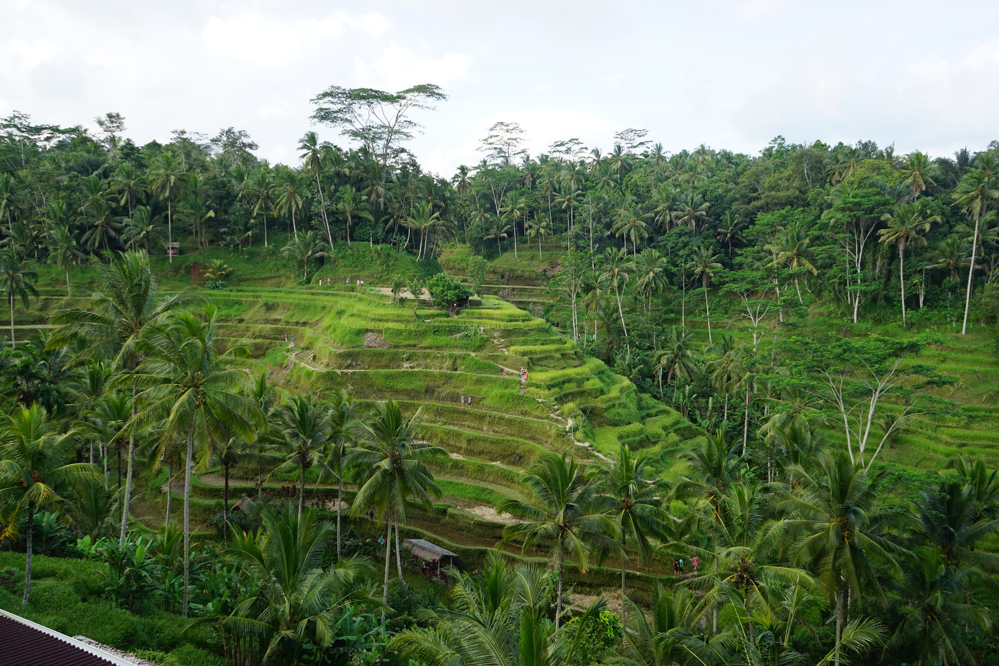 Destination #1 : Bali !
