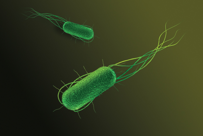 Artist rendering of green bacteria