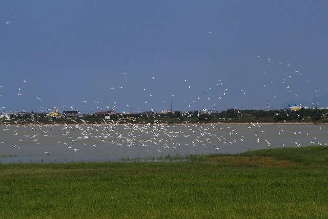 墾丁知名的遊憩據點龍鑾潭每年吸引數萬遊客前來賞鳥。攝影:廖靜蕙