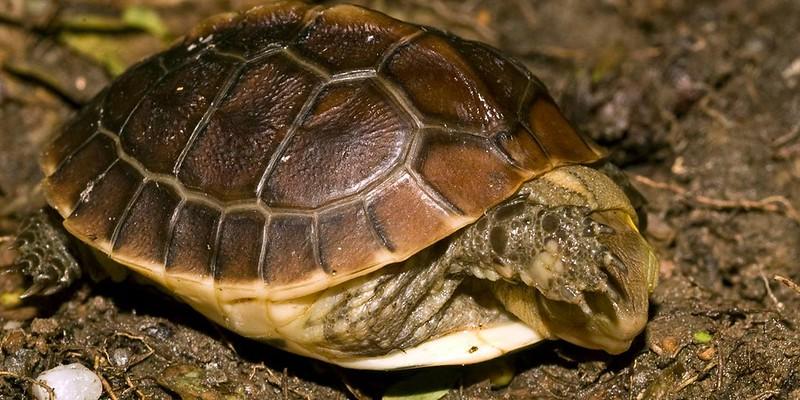「裝睡的人叫不醒」?龜事等著被喚醒的人解決!。圖片來源:陳添喜。