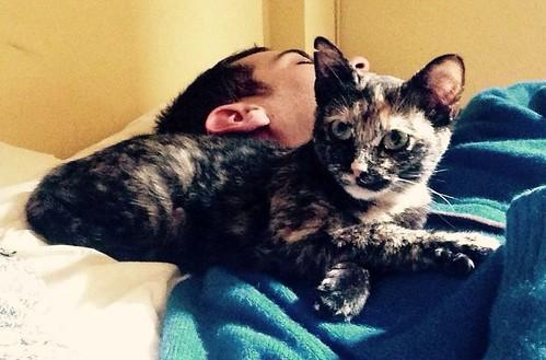 Sunny, preciosa gatita Carey mimosona y muy buena esterilizada, nacida en Septiembre´15, en adopción. Valencia. FALLECIDA. 25924222234_6ba28a7b58