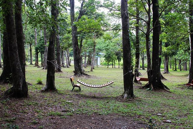 到馨香森林裡漫步嬉戲,也有舒適的吊床。攝影:廖靜蕙